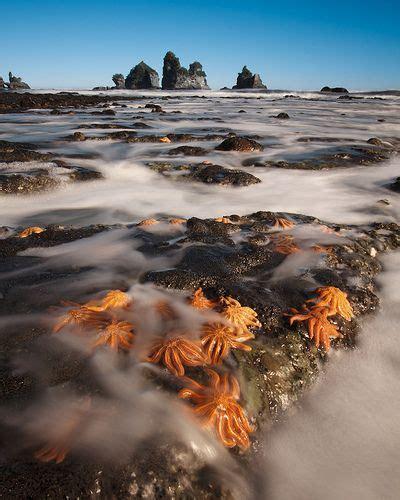 Starfish Colony Island Nations Beautiful Sites Starfish
