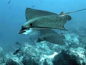 Sea Animals Creatures