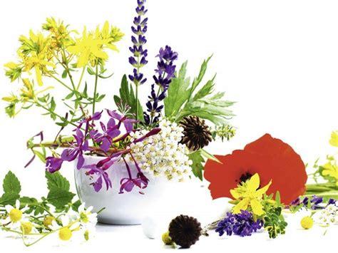 uv le für pflanzen artland poster leinwandbild 187 kr 228 uter stillleben pflanzen