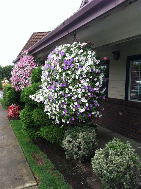 hanging flower baskets hanging flower baskets gardening pinterest