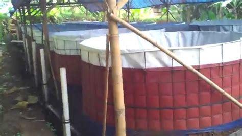 Jual Bibit Lele Sangkuriang Pontianak jual larva benih bibit lele sangkuriang konsumsi area