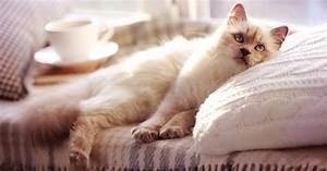 Jouets Pour Chats D Appartement : 6 trucs faire absolument pour rendre votre chat heureux ~ Melissatoandfro.com Idées de Décoration
