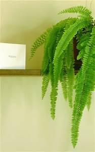 Grünpflanzen Für Dunkle Räume : zimmerpflanzen f r dunkle r ume frauenhaarfarn ~ Michelbontemps.com Haus und Dekorationen