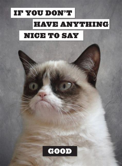 Angry Cat Good Meme - 5 hilarious grumpy cat pictures grumpy cat cat and hilarious