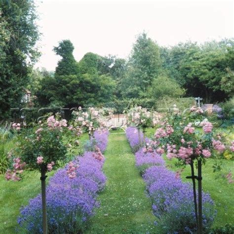 lavender border garden lavender garden with lavender border and standard roses this is all about you pinterest