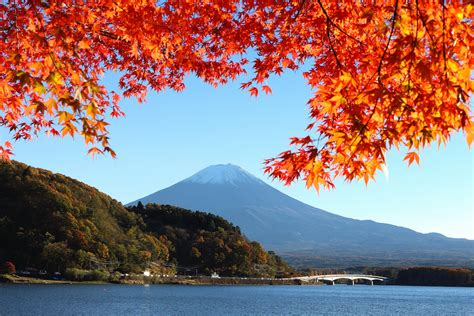 japan mount fuji sky lake tree leaves autumn bridge hd
