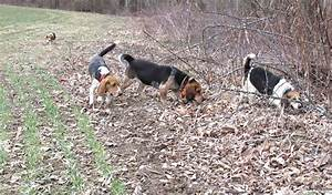 10 tips to better rabbit hunting - Farm and Dairy