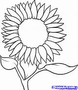 Sunflower Drawing Draw Step Sunflowers Drawings Coloring Flower Outline Line Steps Dragoart Pages Clipart Flowers Tutorial Easy Dawn Clipartmag Pencil sketch template