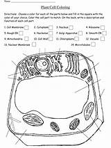 Cell Coloring Worksheet Pdf Plant Key Answer Templateroller Printable Animal Cycle Template 2637 sketch template