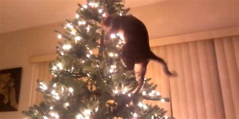 jerk cats return  time  ruin christmas