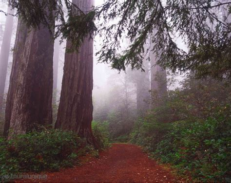 redwood national park california buy prepasted