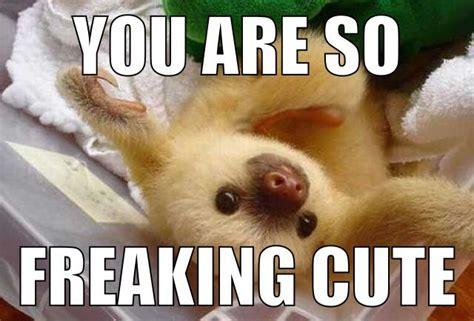 Cute Sloth Meme - sloth meme laugh a little pinterest