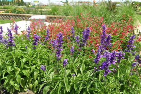 annual garden garden area descriptions plant sciences