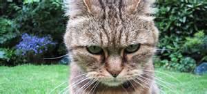 Site De Discussion : selon une tude votre chat aimerait vous tuer vraiment ~ Medecine-chirurgie-esthetiques.com Avis de Voitures
