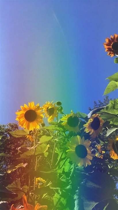 Aesthetic Sunflower Wallpapers Flowers Spring Girasoles Pantalla