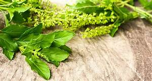 How To Use Holy Basil To Beat Stress And Sleep Better