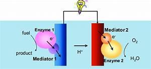 Enzymatic Biofuel Cell Principle