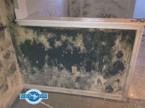 Types Of Carpet Padding by Difference Between Mold And Mildew Mold Mildew Differences
