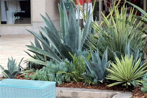 agave tree and landscape 19 best images about landscape design on pinterest gardens glow and pink flamingos
