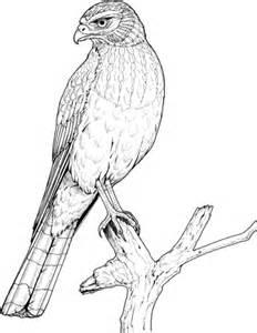 Ausmalbild: Sitzender Adler