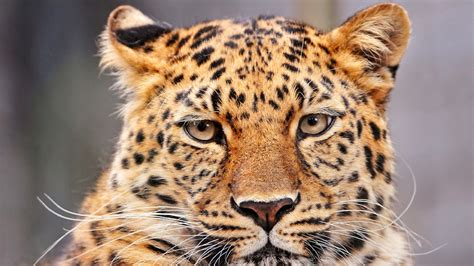 images animal  wildlife fur portrait