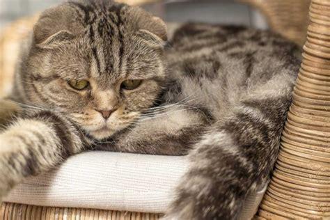 homoeopathie gegen depressionen bei der katze expertode