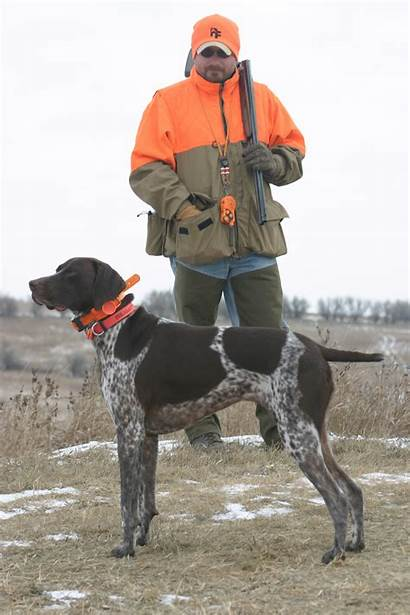Pointer German Shorthaired Hunting Dogs Dog Breed