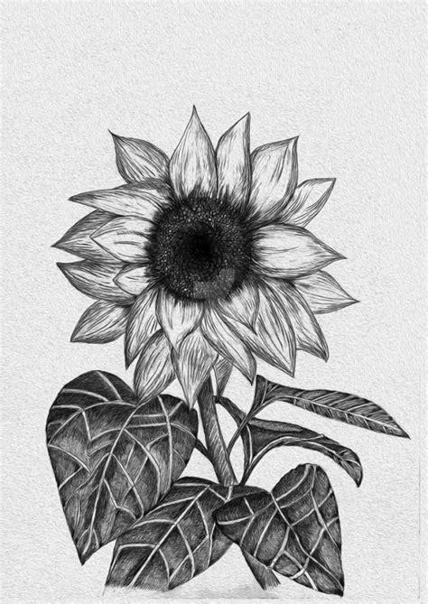 sketsa gambar bunga tulip gambar mewarnai