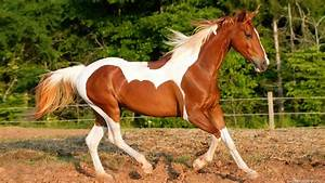 Outoppies Cool Stuff: Beautiful Horses