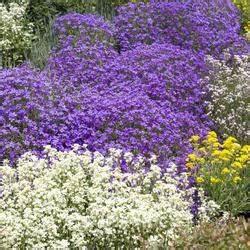 Couvre Sol Vivace : jardinage vos astuces sur page 8 ~ Premium-room.com Idées de Décoration