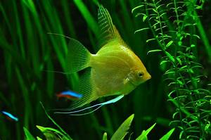 Sauerstoff Im Aquarium : aquarium pflanzen arten beleuchtung gesundes wachstum ~ Eleganceandgraceweddings.com Haus und Dekorationen