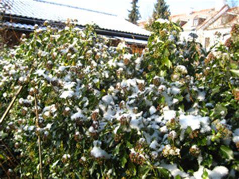 Immergrüne Gräser by Newsletter Winter 2012