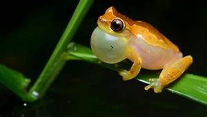 Can You Tell Whether This Frog Is Excited Just By