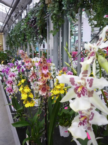 garden fiori e piante piante e fiori alba catti garden