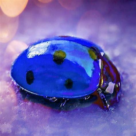 327 best images about Ladybugs on Pinterest   Macro photo