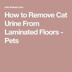 how to get cat out of clothes how to get cat urine smell out of clothes clothes pinterest urine smells cat urine smells