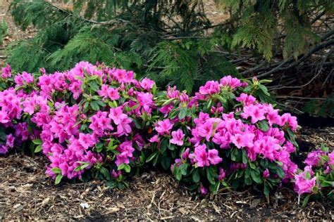 Great Plants For Shade Gardens Hgtv