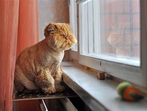 cat window perch what 39 s the deal with cats and windows mnn
