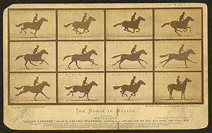 The Horse In Motion  Illus  By Muybridge   U0026quot Sallie Gardner  U2026
