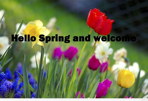 spring pictures images  quotes
