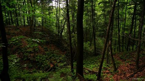 Green Forest Picture Hd by Forest Green Forest Wallpaper Green