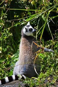Auckland Zoo Animals