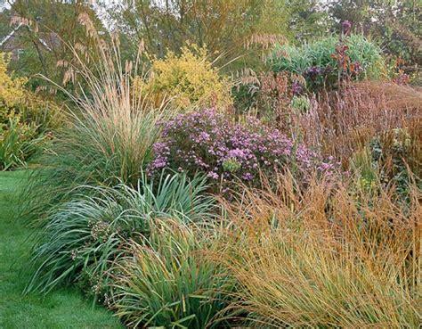hardy grasses for the garden 626 best ornamental grasses and landscape grasses images on pinterest