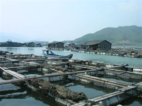 facts  aquaculture farmed fish