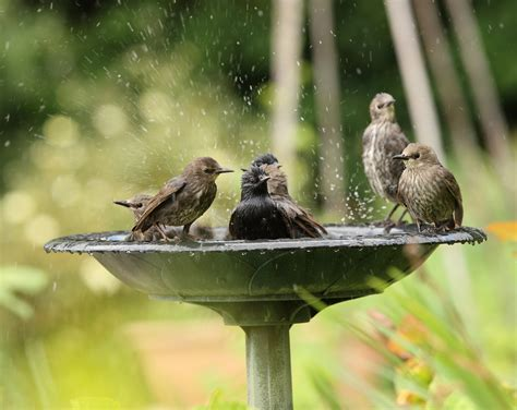 providing water for birds cubs