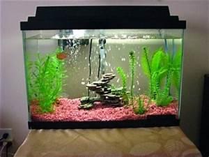 Hey all Aquarium Advice Aquarium Forum munity