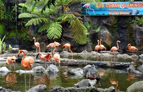 batu secret zoo  modern sophisticated zoo  batu