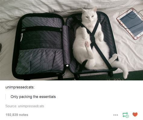 packed and ready to go tumblr