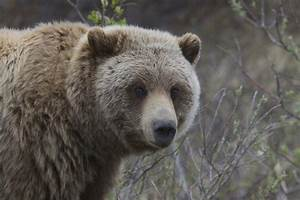 9 Bear Safety Tips From A Bear Biologist