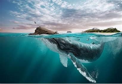 Whale Underwater Water Animals Nature Landscape Island